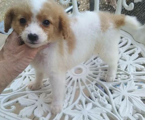 ミックスの子犬(ID:1248811153)の1枚目の写真/更新日:2018-03-19