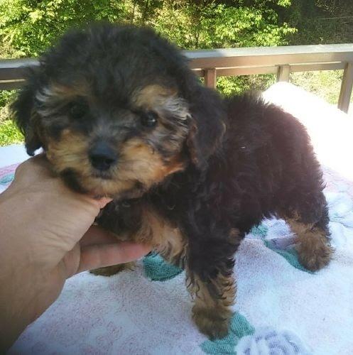 ミックスの子犬(ID:1248811154)の1枚目の写真/更新日:2018-03-26