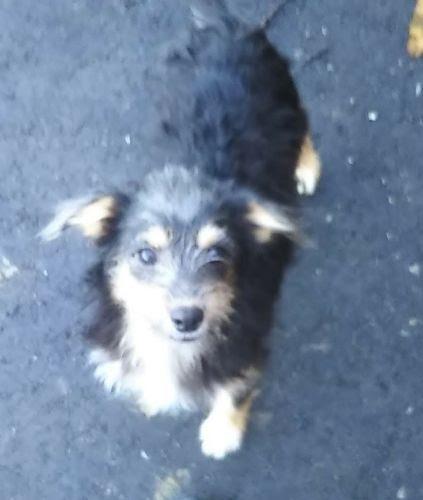 ミックスの子犬(ID:1248811183)の1枚目の写真/更新日:2021-08-16