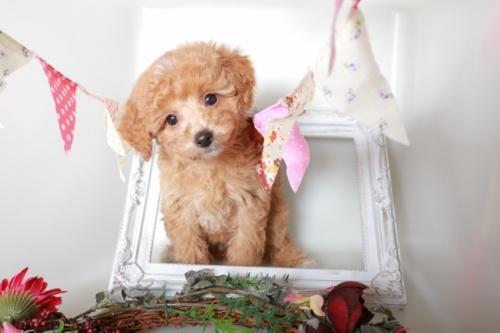 ミックスの子犬(ID:1250011122)の1枚目の写真/更新日:2017-04-17