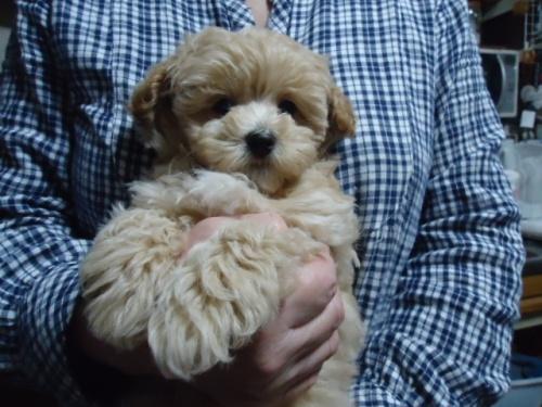 ミックスの子犬(ID:1250811001)の1枚目の写真/更新日:2018-11-12