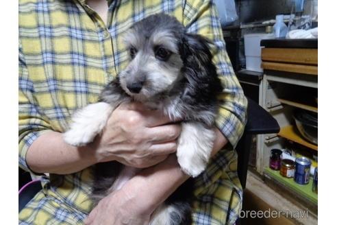 ミックスの子犬(ID:1250811002)の1枚目の写真/更新日:2018-12-03