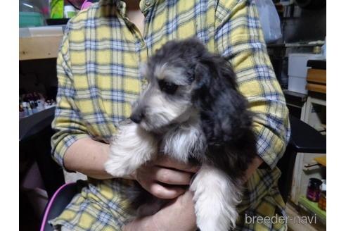ミックスの子犬(ID:1250811002)の2枚目の写真/更新日:2018-12-03