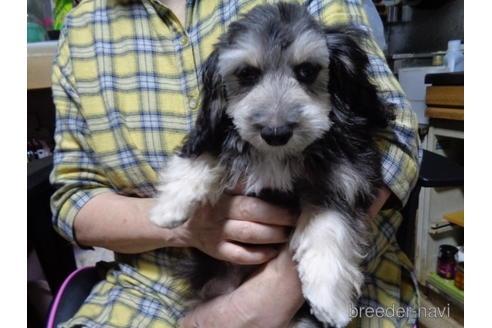 ミックスの子犬(ID:1250811002)の3枚目の写真/更新日:2018-12-03