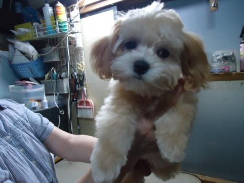 ミックスの子犬(ID:1250811004)の2枚目の写真/更新日:2018-11-12