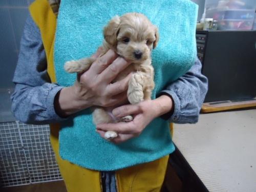 ミックスの子犬(ID:1250811004)の3枚目の写真/更新日:2018-11-12