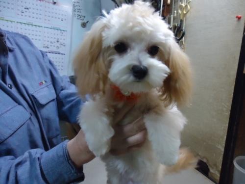 ミックスの子犬(ID:1250811004)の4枚目の写真/更新日:2018-11-12