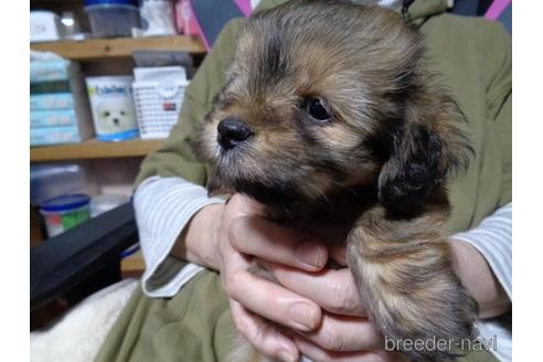 ミックスの子犬(ID:1250811014)の1枚目の写真/更新日:2018-12-03