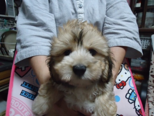 ミックスの子犬(ID:1250811068)の2枚目の写真/更新日:2019-04-15