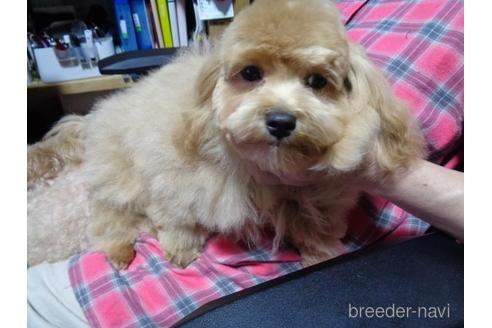 ミックスの子犬(ID:1250811078)の1枚目の写真/更新日:2017-01-26