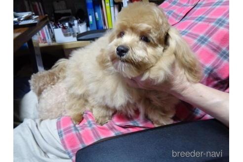 ミックスの子犬(ID:1250811078)の2枚目の写真/更新日:2017-01-26
