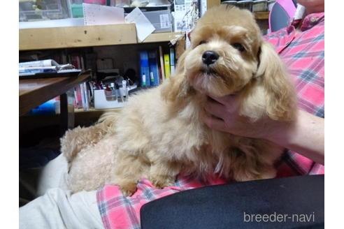 ミックスの子犬(ID:1250811078)の3枚目の写真/更新日:2017-01-26
