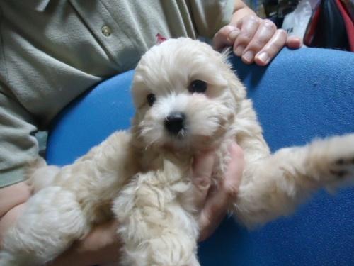 ミックスの子犬(ID:1250811087)の3枚目の写真/更新日:2017-06-13