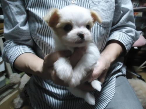 ミックスの子犬(ID:1250811091)の1枚目の写真/更新日:2017-08-03