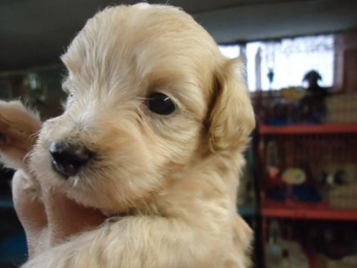 ミックスの子犬(ID:1250811095)の2枚目の写真/更新日:2017-09-12