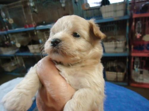 ミックスの子犬(ID:1250811095)の3枚目の写真/更新日:2017-09-12