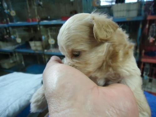 ミックスの子犬(ID:1250811095)の5枚目の写真/更新日:2017-09-12
