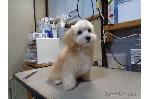 ミックスの子犬(ID:1250811096)の1枚目の写真/更新日:2017-09-12