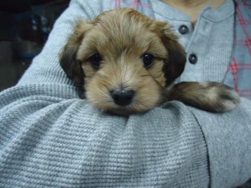 ミックスの子犬(ID:1250811102)の1枚目の写真/更新日:2017-11-17