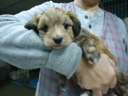 ミックスの子犬(ID:1250811102)の3枚目の写真/更新日:2017-11-17