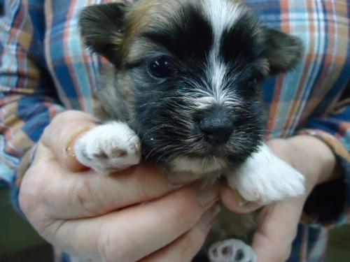 ミックスの子犬(ID:1250811107)の1枚目の写真/更新日:2018-05-01