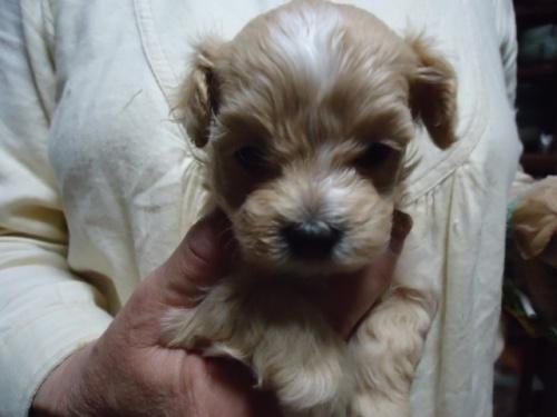 ミックスの子犬(ID:1250811109)の2枚目の写真/更新日:2018-06-18