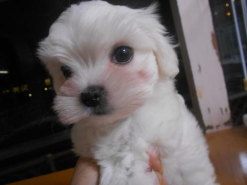 ミックスの子犬(ID:1252311048)の2枚目の写真/更新日:2018-07-15