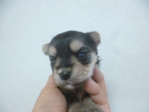 ミックスの子犬(ID:1252311125)の1枚目の写真/更新日:2018-07-15