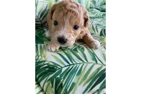 ミックスの子犬(ID:1252311197)の1枚目の写真/更新日:2020-08-15
