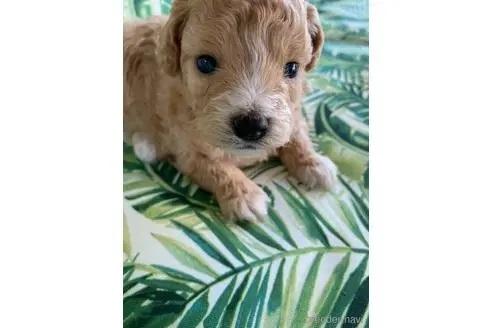 ミックスの子犬(ID:1252311197)の2枚目の写真/更新日:2020-08-15