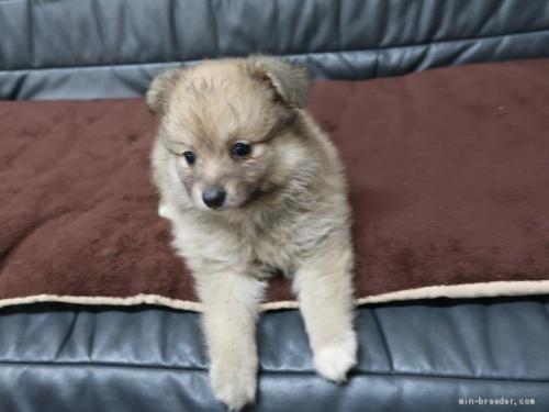 ミックスの子犬(ID:1252511040)の1枚目の写真/更新日:2020-09-14