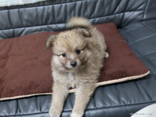 ミックスの子犬(ID:1252511040)の3枚目の写真/更新日:2020-09-14