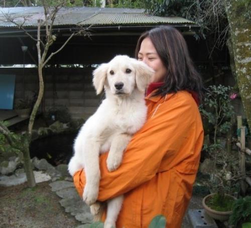 ゴールデンレトリバーの子犬(ID:1252511053)の2枚目の写真/更新日:2018-10-08