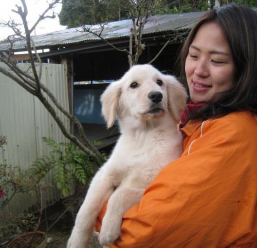 ゴールデンレトリバーの子犬(ID:1252511053)の3枚目の写真/更新日:2018-10-08