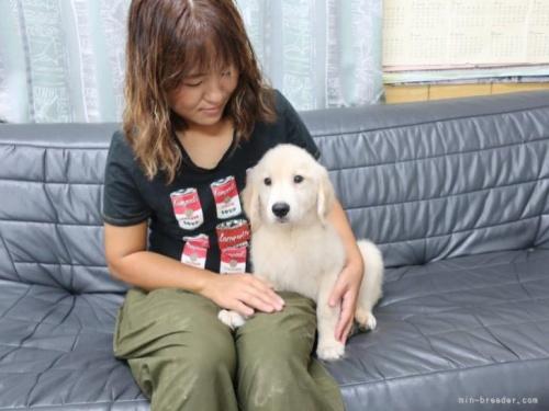 ゴールデンレトリバーの子犬(ID:1252511081)の2枚目の写真/更新日:2021-07-17