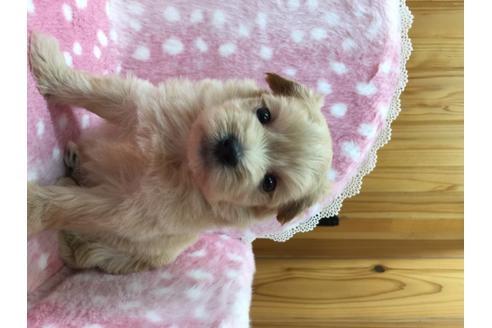 ミックスの子犬(ID:1254311120)の1枚目の写真/更新日:2018-05-07