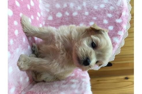 ミックスの子犬(ID:1254311120)の2枚目の写真/更新日:2018-05-07