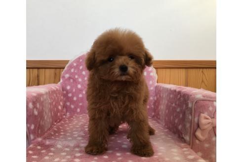 ミックスの子犬(ID:1254311121)の2枚目の写真/更新日:2018-05-07