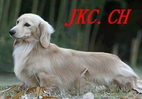 ミニチュアダックスフンド(ロング)の子犬(ID:1255011214)の4枚目の写真/更新日:2016-12-12