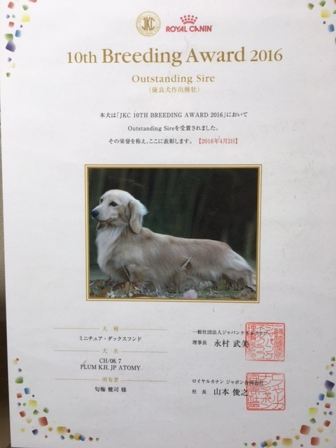 ミニチュアダックスフンド(ロング)の子犬(ID:1255011255)の4枚目の写真/更新日:2017-06-03