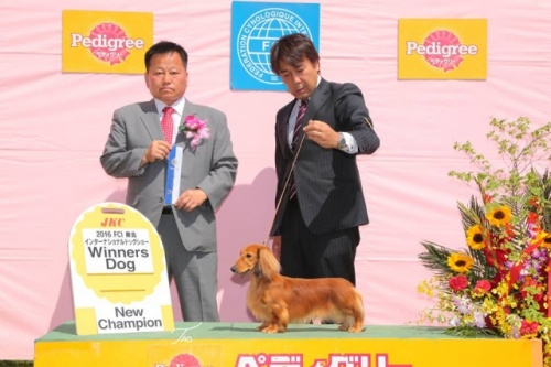ミニチュアダックスフンド(ロング)の子犬(ID:1255011272)の4枚目の写真/更新日:2017-07-10