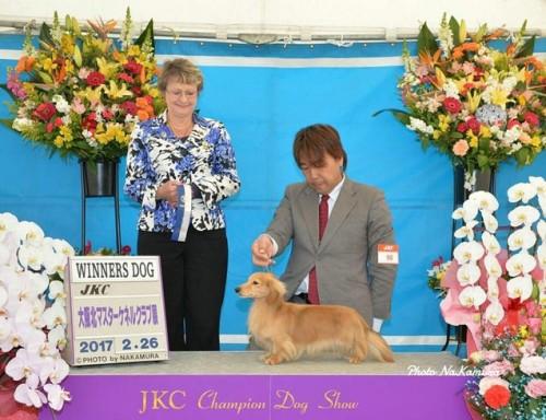 ミニチュアダックスフンド(ロング)の子犬(ID:1255011290)の4枚目の写真/更新日:2017-08-04