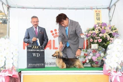 カニンヘンダックスフンド(ロング)の子犬(ID:1255011351)の3枚目の写真/更新日:2018-09-18