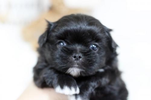 ミックスの子犬(ID:1255411283)の1枚目の写真/更新日:2019-02-08