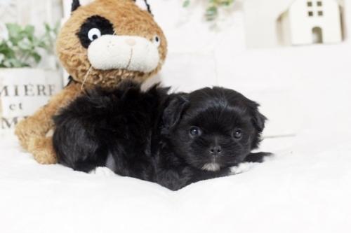 ミックスの子犬(ID:1255411283)の2枚目の写真/更新日:2019-02-08