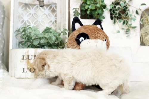 ミックスの子犬(ID:1255411284)の2枚目の写真/更新日:2018-05-23