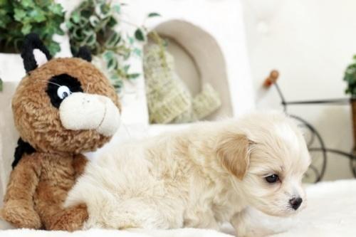 ミックスの子犬(ID:1255411284)の3枚目の写真/更新日:2018-05-23
