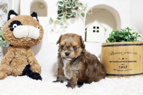 ミックスの子犬(ID:1255411285)の3枚目の写真/更新日:2018-05-23