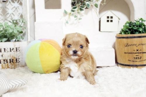 ミックスの子犬(ID:1255411286)の2枚目の写真/更新日:2018-06-22