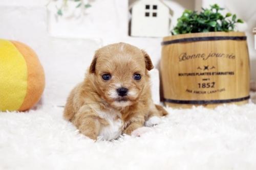 ミックスの子犬(ID:1255411286)の3枚目の写真/更新日:2018-06-22